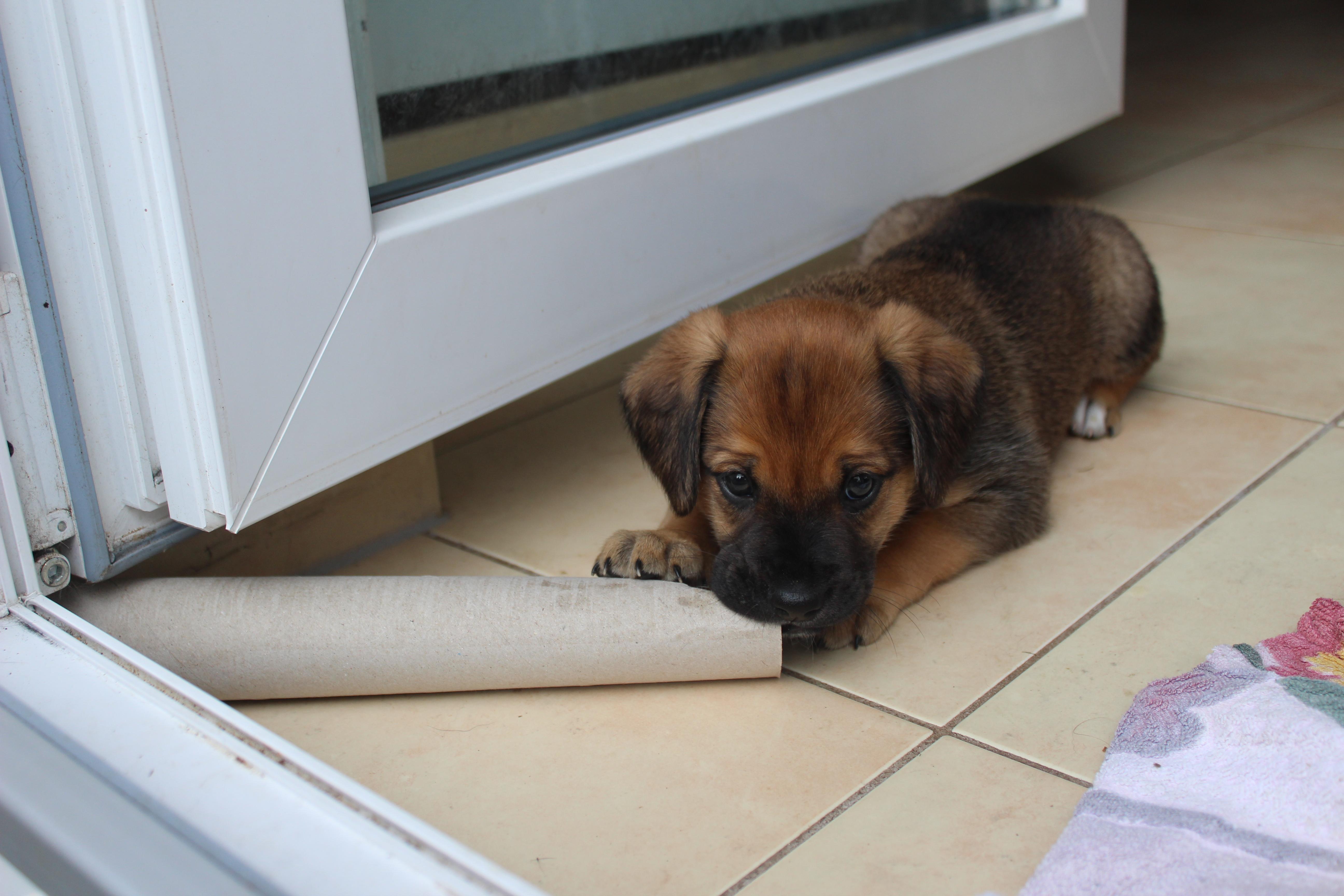 kleiner Hund liegt am Boden